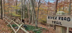 A Hidden Timeless Beauty in the Lap of Nature - Mianus River State Park