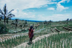 trasering jatiluwih is one of the terracing locations besides in the Ubud area the exact location is