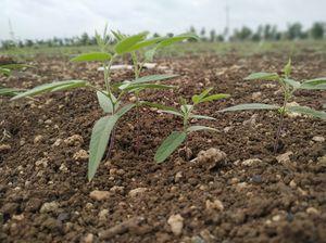 Cultivation Time #Farmer