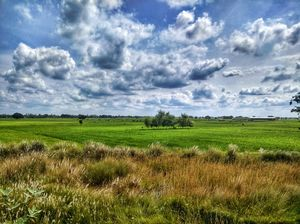 Landscape of Green field and amazing blue clouds