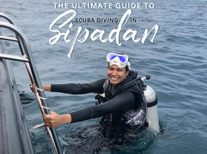 THE ULTIMATE GUIDE TO SCUBA DIVING IN SIPADAN