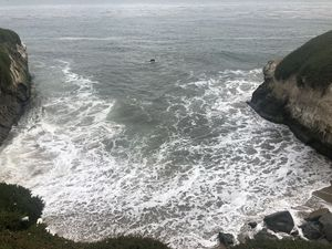 Natural Bridges State Beach 1/undefined by Tripoto