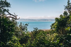 Overnight Stay on Nature- and Birdlovers Paradise: Kapiti Island