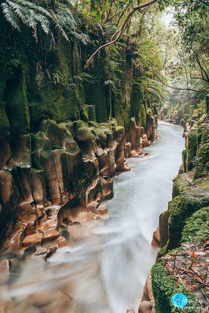 Whirinaki Forest Park 1/undefined by Tripoto