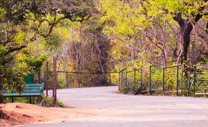 Discover Delhi - Kamla Nehru Ridge