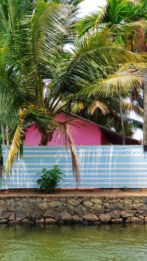 Perfect colour palettes in the backwaters of Alleppey