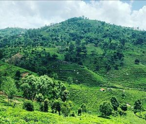 Ooty - Queen of Hill Stations - Southern India