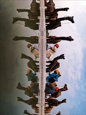 Reflections of Pushkar Camel Fair !