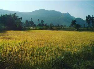 A rejuvenating trip to Bhandardara @tripotocommunity #travelancer
