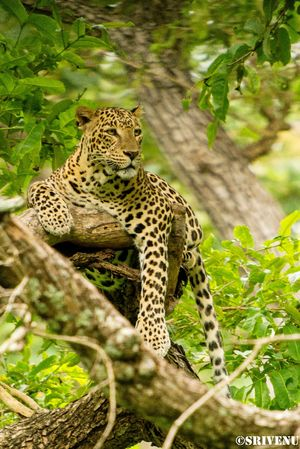 Resting on tree top