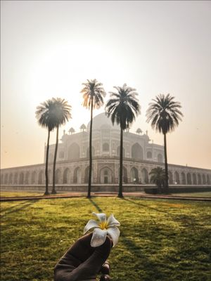 Flower as beautiful as humayuns tomb. New Delhi.