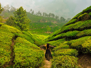 Munnar- Kashmir of South India