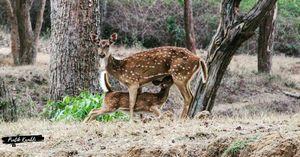 My Recent Trip To Bandipur Tiger Reserve , Karnataka