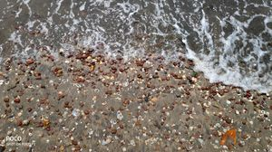 A beach is not only a sweep of sand, but shells of sea creatures, the sea glass, the seaweed, the in