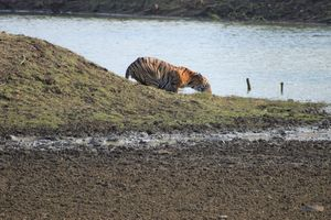 The Magical Wilderness-Tadoba Tiger Reserve