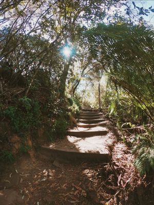 Photoblog:The Road Less Travelled By! Blue Mountains,Sydney,NSW