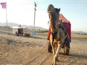 Incredible Trip of Pushkar, Rajasthan, India