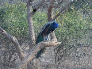 Sariska Bhangarh Trip - A Blend of both Jungle and History