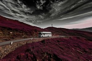 Trippy Bus RIDE