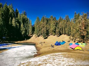 Walk on a carpet of brown leaves and white snow at Kedarkantha !!