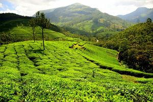 Munnar, Emerald Of Kerala