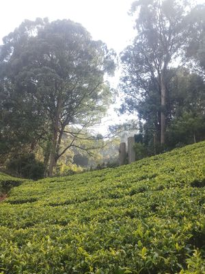 Love Hill stations? Haven't visited Ooty yet?