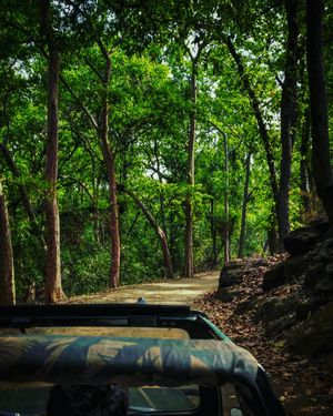 A thrilling experience in green jungles of bhandhavgarh #colourgreen