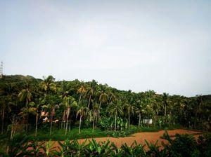 Life in between off coconut...