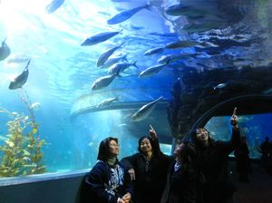 Sea Life Melbourne Aquarium 1/undefined by Tripoto