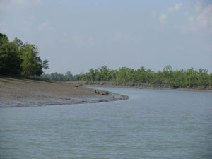 Royal Bengal Residence: The Sundarbans