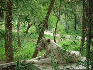 Bannerghatta National Park 1/undefined by Tripoto