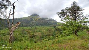 Best of Kerala : Wayanad