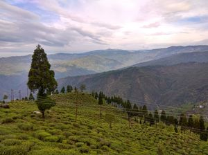 A SHORT TOUR TO DARJEELING & TINCHULEY