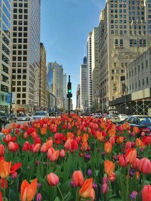Spring Break@Chicago