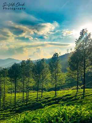 A Journey to Kerala... through my photos!