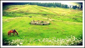 Meadows of flowers Gulmarg,  and Place for exciting snow sports and adventures