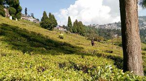 Darjeeling... Queen of hills