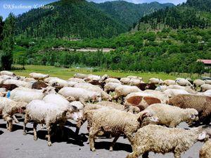 Pahalgam – The valley of shepherds