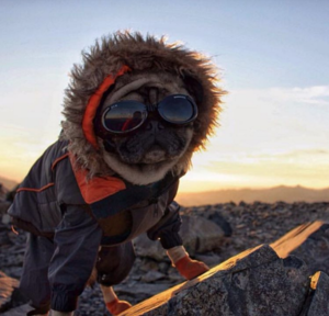16 Dogs Who Show You How To Do Camping Right