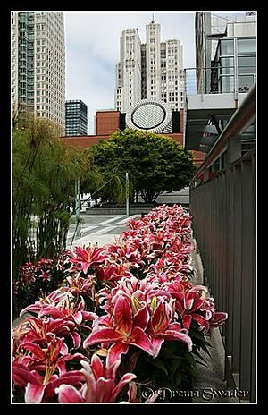 San Francisco Museum of Modern Art 1/undefined by Tripoto