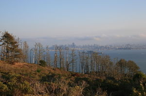 Angel Island 1/1 by Tripoto