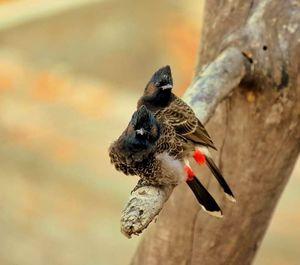 Bird-watching: Dooars and Jalpaiguri