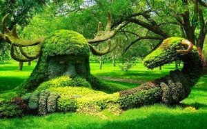 देखकर बता नहीं पाएँगे कि सिर्फ एक पेड़ है या पूरा जंगल: भारत के सबसे बड़े पेड़ की कहानी