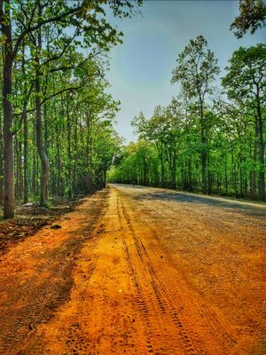 Ride to Joypur Forest