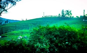View from Nilgiri Express #colourgreen