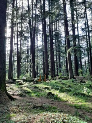 Manali nature walks #colourgreen