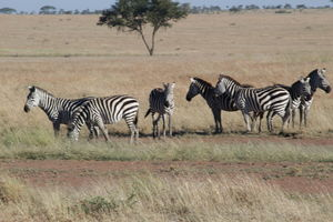 Safari in Tanzania, Serengeti National Park