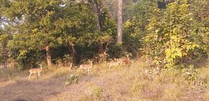 Safari at Rajaji National park Haridwar uttarakhand amidst dense forest and visit to Patanjali...