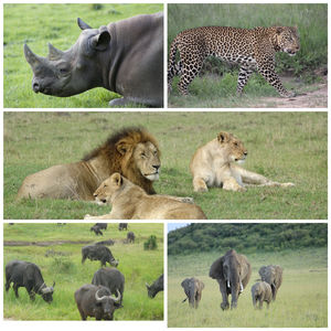 Masai Mara - The Stunning African Savannah - To travel is to live!