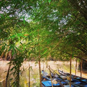 Natural Canals, Sampan Ride, Close to Nature!